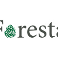 foresta_balts